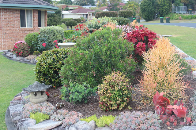 Home garden maintained by entrants over 75 years of age 2nd Michael Cassin, 12 Jack Ladd St, Coffs Harbour