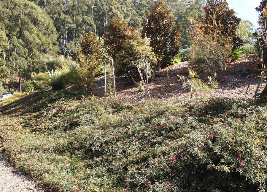 mulch-2